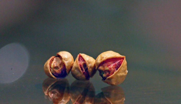 Calorías de pistachos crudos o tostados