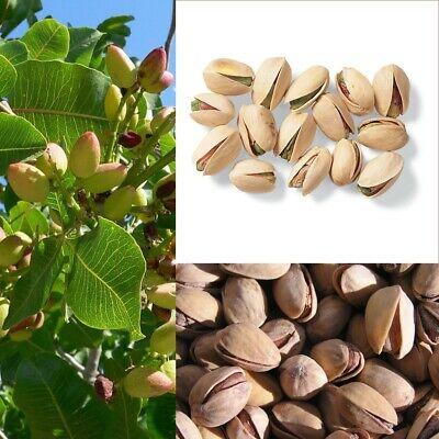 Cultivo de pistachos en España